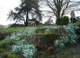 Tickets Alert: Snowdrop Sundays at Gatton Park