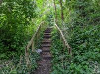 London's Pocket Parks: Belsize Wood, NW3