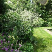 Visit a garden - De Beauvoir Gardens