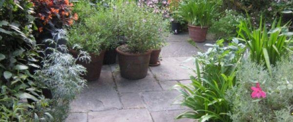Visit a garden - 70 Gloucester Crescent (Camden)
