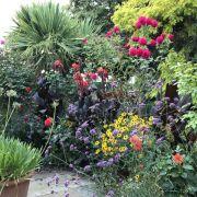 Visit a garden - 36 Melrose Road (Wandsworth)