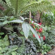 Visit a garden - 24 Grove Park (Camberwell)