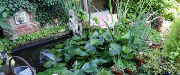 Visit a garden - Pettits Boulevard (Romford)