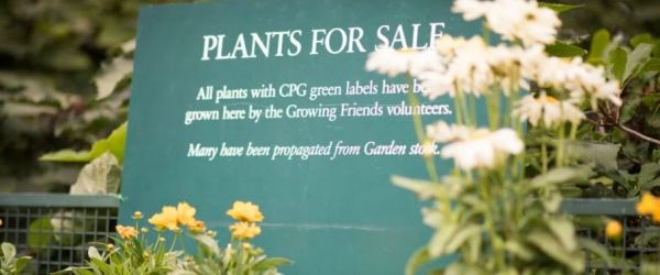Houseplant Market at the Chelsea Physic Garden
