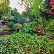 Visit a garden - The Watergardens (Kingston-upon-Thames)