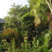 Open Garden afternoon