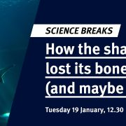 Science Breaks: How the shark lost its bones (and maybe why)