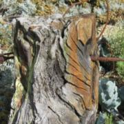 The Integration of Derek Jarman's Garden