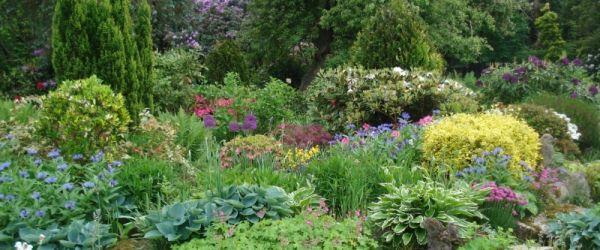 Visit a garden - Shieling (Kingswood)
