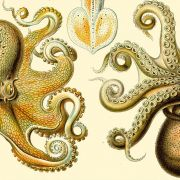 The Octopus & Evolution of Intelligent Life with Peter Godfrey-Smith, Zoom