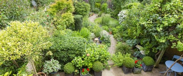 Visit a garden - 7 Woodbines Avenue (Kingston-upon-Thames)