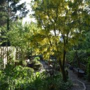 Visit a garden - 101 Pepys Road (New Cross)