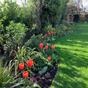 Visit a garden - 11 West Hill (South Croydon)