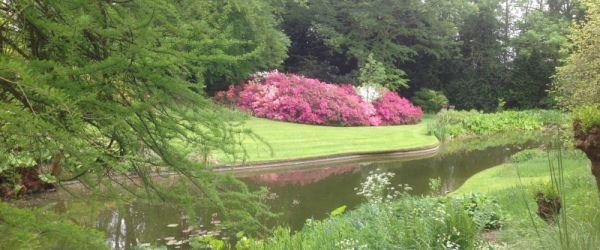 Visit a garden - Highwood Ash (Mill Hill)