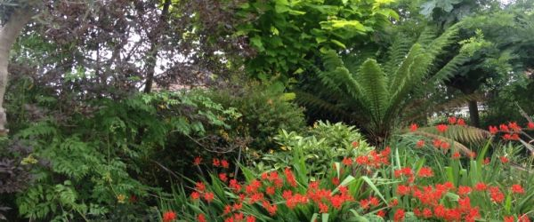Visit a garden - 31 Hendon Avenue (Finchley)