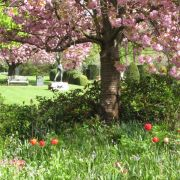 Visit a garden - Cadogan Place South Garden (Chelsea)