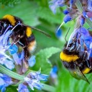 Why our Gardens should change- Adapting our Gardens for Insects