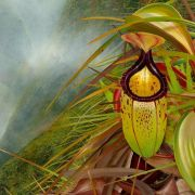 The Darker Side of Plants - The Underworld of Plants