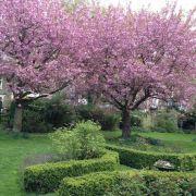 Visit a garden - Arundel & Elgin Gardens (Notting Hill)