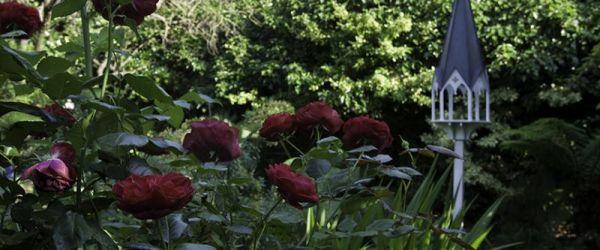 Visit a garden - Lyndhurst Square Garden Group (Peckham)