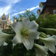 The Gardens of Westminster Abbey - talk by the Head Gardener