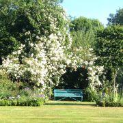 Visit a garden - 49 Lee Road (Blackheath)