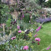 Visit a garden - Brixton Water Lane Gardens
