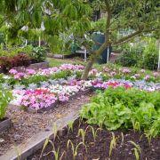 Visit a garden - Paddock Allotments & Leisure Gardens (Raynes Park)