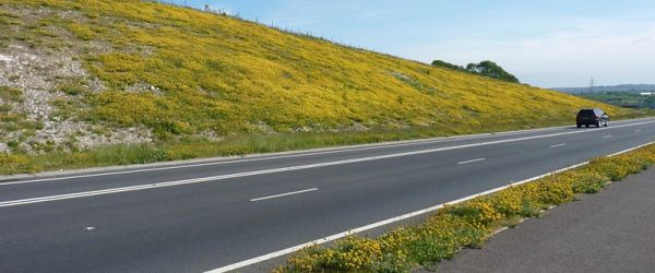 Borderlands: Road Verges as Highways for Wildlife