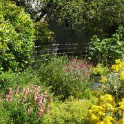 Gardens: A Vital Refuge for Pollinators