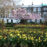 Visit a garden - Arlington Square Gardens (Islignton)