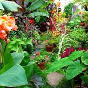 Visit a garden - New Road (Dagenham)