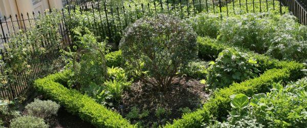Visit a garden - Garden of Medicinal Plants (Regents Park)