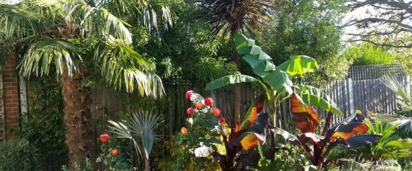 Visit a garden - Lauradale Road (Muswell Hill)