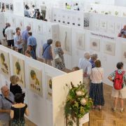 RHS Botanical Art and Photography Show