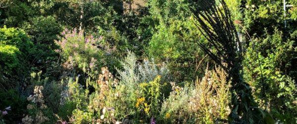 Visit a garden - Manor Road (Stoke Newington)