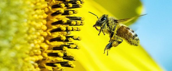 Fantastic Flowers and the Creatures that Pollinate Them