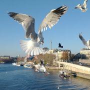 Adaptation and Maladaptation in the Urban Habitat