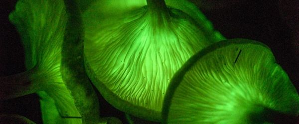 Entangled Life: How Fungi Change our Minds & Shape our Futures