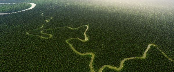 Protecting Rainforests - The Planet's Great Protector