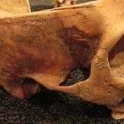 Craven Street Bones