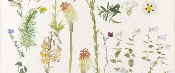 Elizabeth Blackadder: Favourite Flowers